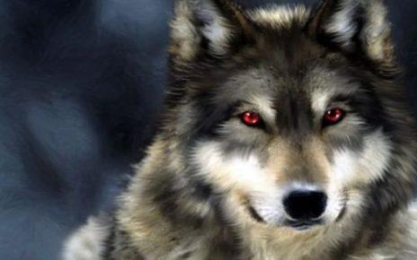 5 Pemahaman Salah tentang Serigala yang Wajib Kamu Tahu