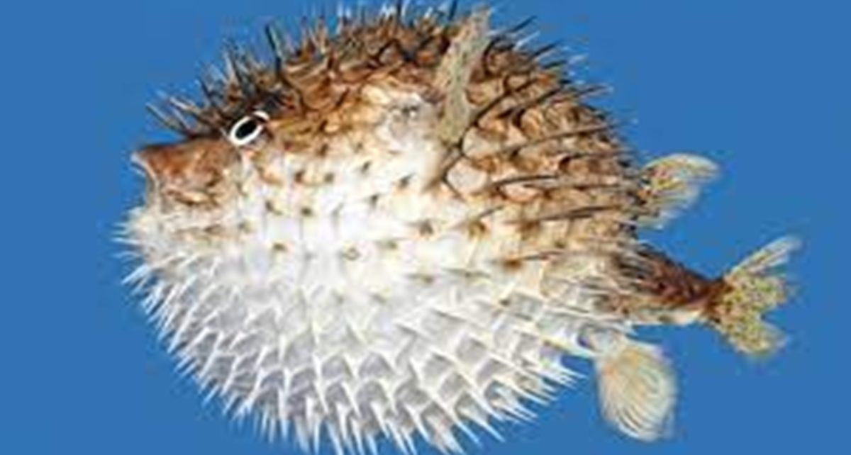 10 Jenis Ikan Air Payau yang Bisa Dikonsumsi dan Dipelihara Serta Cara Budidaya